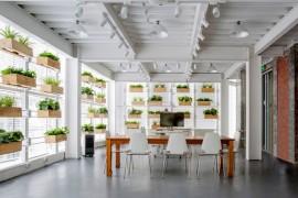 办公室绿化方案_深圳办公室装修设计之室内绿化的处理方式_康蓝装饰公司